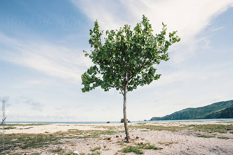 Ocean landscape and beach with isolated tree with green leafes. by Soren Egeberg for Stocksy United
