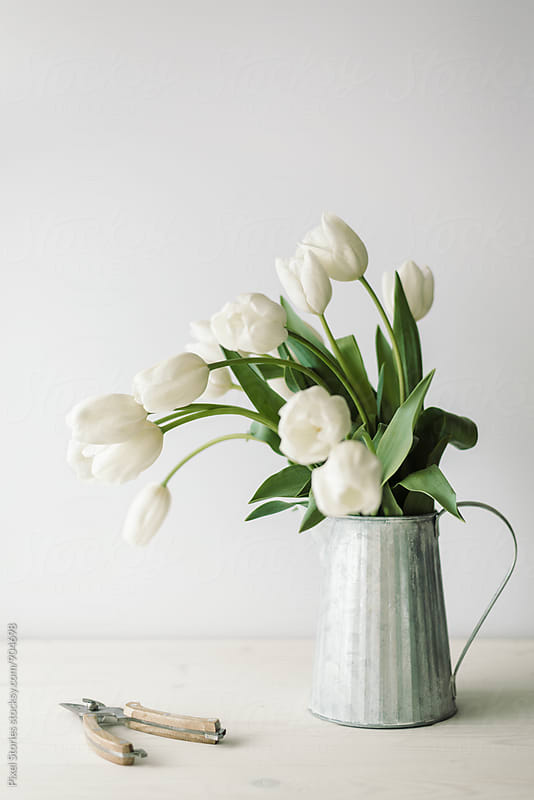 White tulips against white wall by Pixel Stories for Stocksy United
