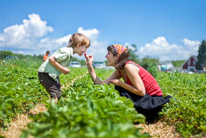 Mom feeds a fresh strawberry to her son in a berry patch by Cara Dolan for Stocksy United