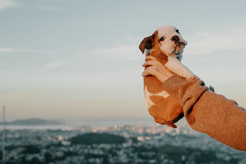 Puppy over City by Sidney Morgan for Stocksy United
