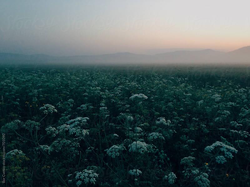 Green before sunrise by Bor Cvetko for Stocksy United