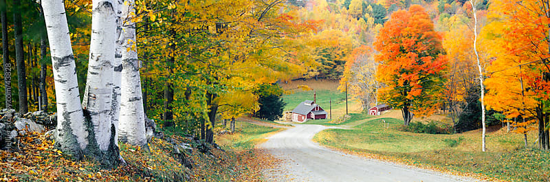 United States of America, Vermont, Fall colours and country road near Woodstock by Gavin Hellier for Stocksy United
