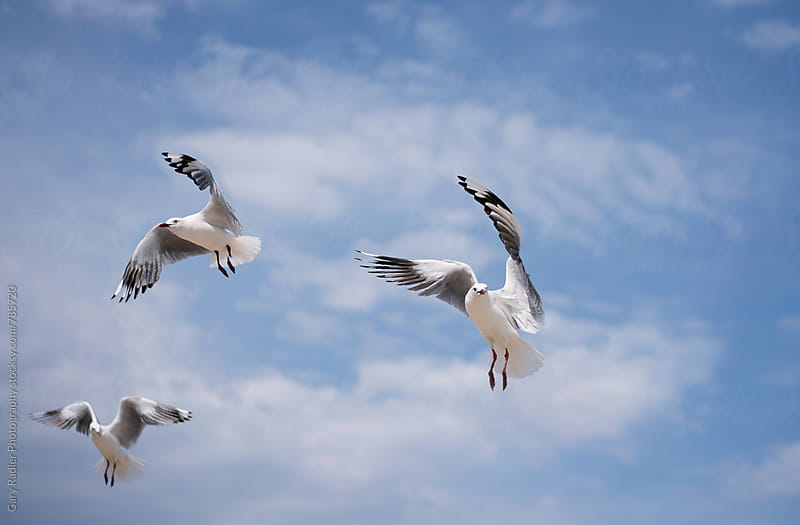 Three Seagulls by Gary Radler Photography for Stocksy United