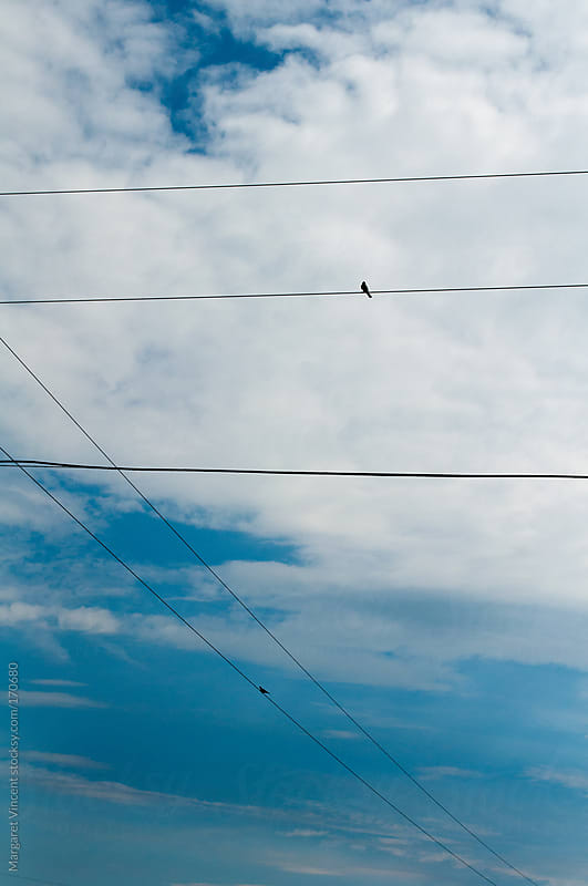 birds on a wire against a blue sky by Margaret Vincent for Stocksy United