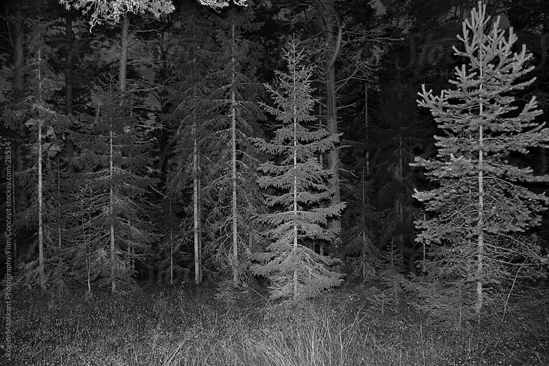 Trees by Rogier Maaskant Photography/Film/Concept for Stocksy United