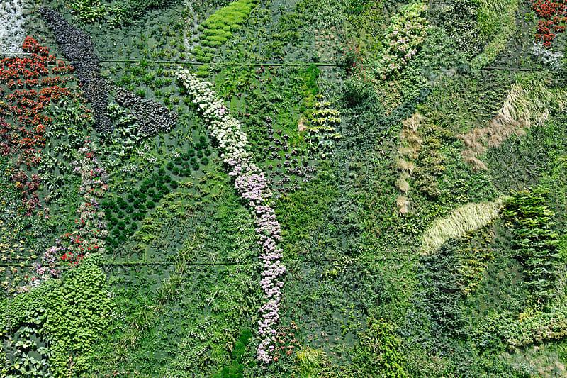 Vertical Garden Background by Victor Torres for Stocksy United