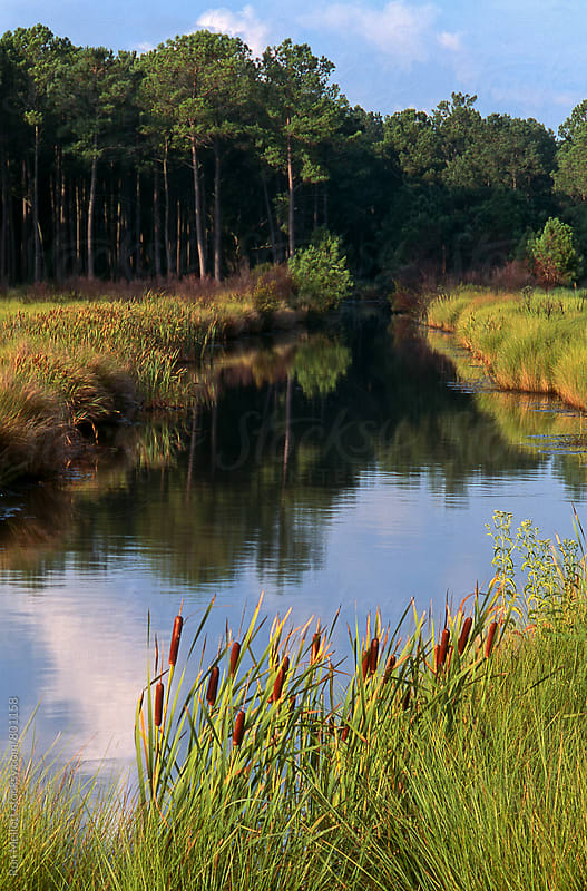Small stream feeding through Spartina marsh into Ashepoo River, autumn, South Carolina by Ron Mellott for Stocksy United