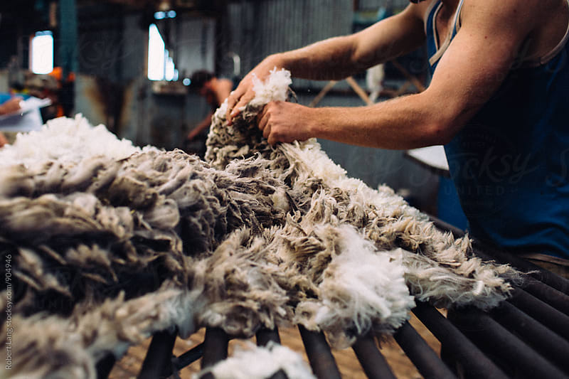 Australian wool by Robert Lang for Stocksy United