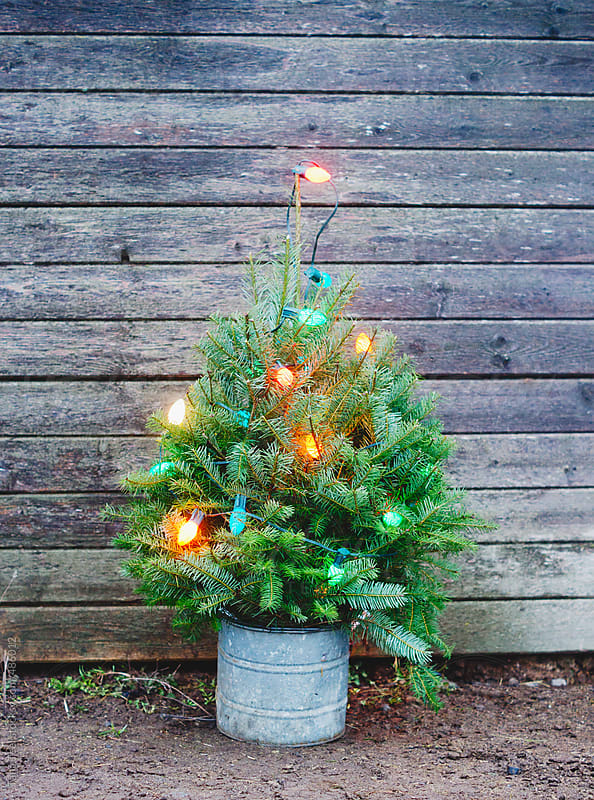 Miniature lighted Christmas tree in a bucket in front of rustic wall by Tana Teel for Stocksy United