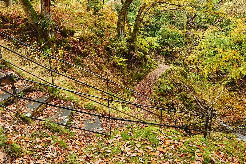 Steps through autumnal woodland. Cumbria, UK. by Liam Grant for Stocksy United