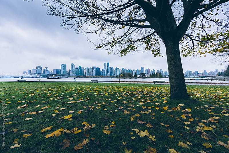 skyline of vancouver by yuanyuan xie for Stocksy United