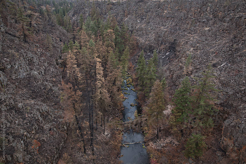 A Creek From A Birds Eye View by Carey Haider for Stocksy United