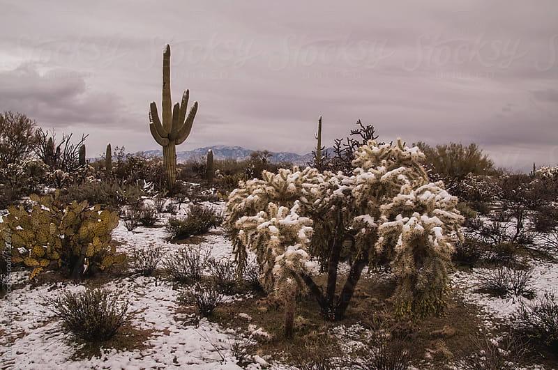 Snow on Desert Scene by Tamara Pruessner for Stocksy United