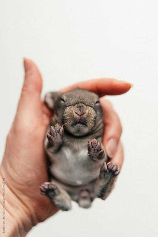 Baby Bunny by Melanie DeFazio for Stocksy United
