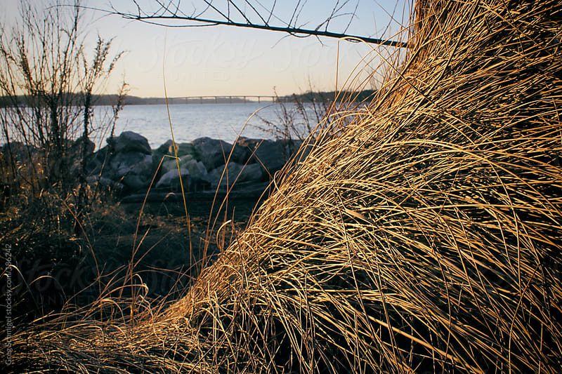 Wetlands nature and landscape of the Chesapeake Bay in early spring by Greg Schmigel for Stocksy United