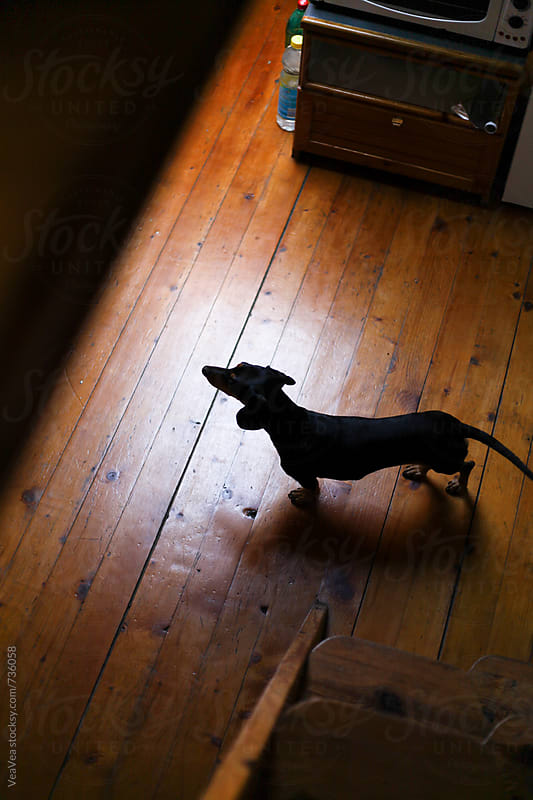Small dog standing on the floor. From above by VeaVea for Stocksy United