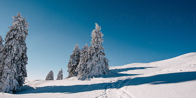 Snow covered trees in winter by Peter Wey for Stocksy United