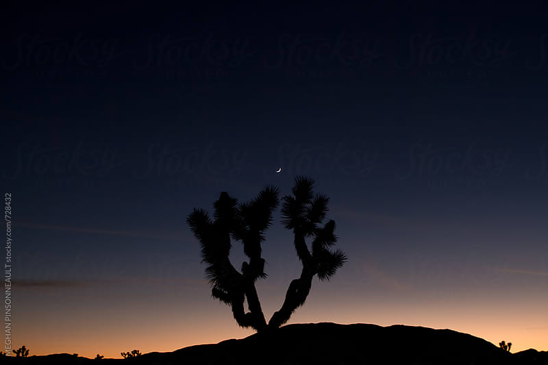 Dreamy Sunset with Single Joshua Tree with Moon by MEGHAN PINSONNEAULT for Stocksy United