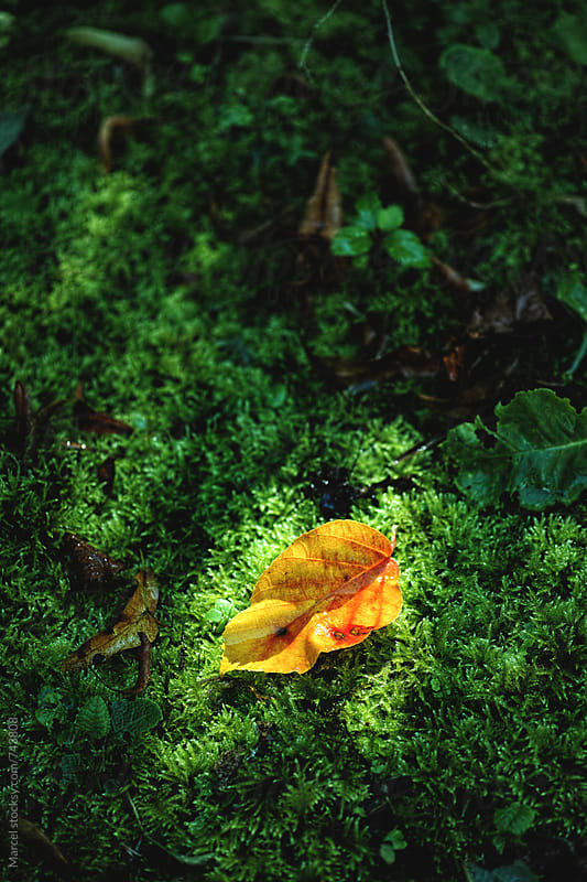 Autumn leaf in small patch of sunlight on green moss by Marcel for Stocksy United