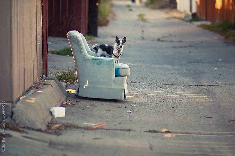 Dog sits in abandoned chair in alley by Rachel Bellinsky for Stocksy United