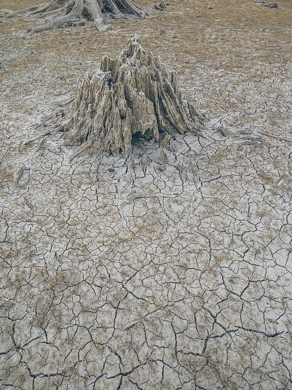 dead wood and drought land by yuanyuan xie for Stocksy United