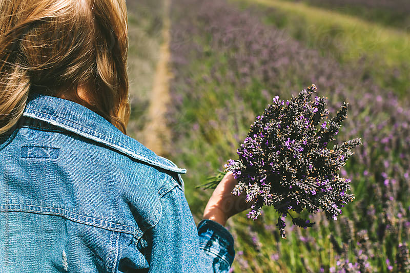 Girl in a lavender field, holding a bunch of lavender. by Helen Rushbrook for Stocksy United