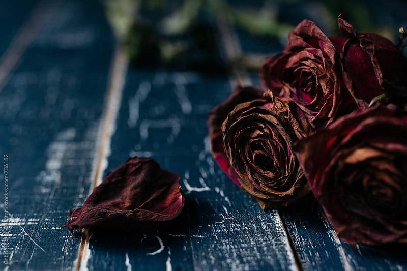 Three wilted crimson roses and a petal by Gabriel (Gabi) Bucataru for Stocksy United