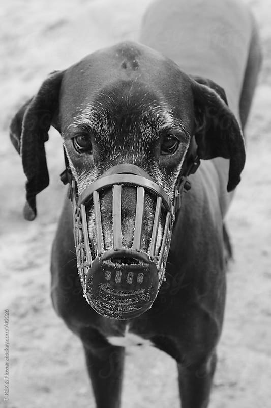Dog with sand in the muzzle by Danil Nevsky for Stocksy United