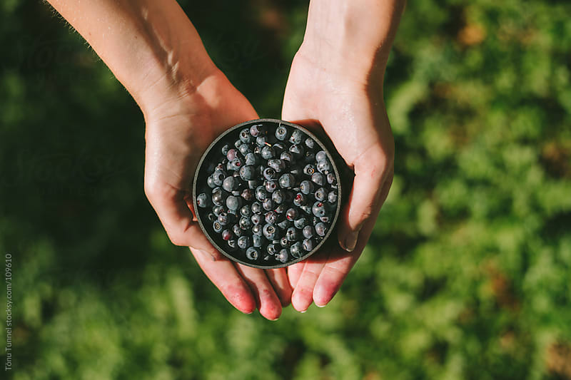Picking blueberries by Tõnu Tunnel for Stocksy United