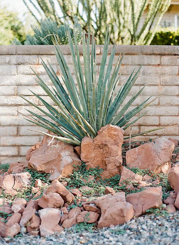 Cactus plant by Ali Harper for Stocksy United
