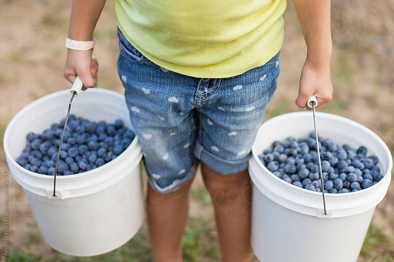 Anonymous girl holding two large buckets full of fresh-picked ripe blueberries by Amanda Worrall for Stocksy United