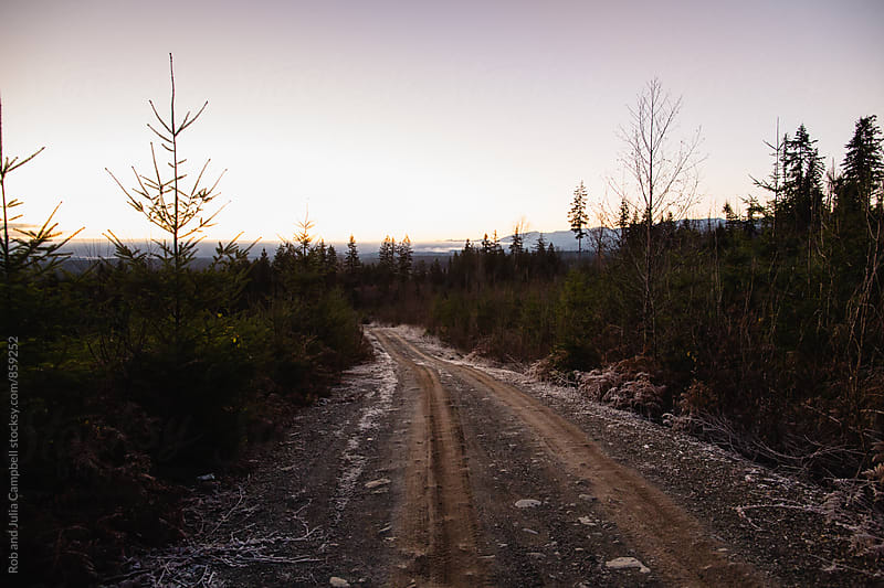 Frosty logging road at sunrise by Rob and Julia Campbell for Stocksy United