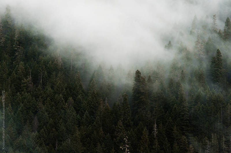 Mountain of trees covered in fog  by Kristen Marie Parker for Stocksy United