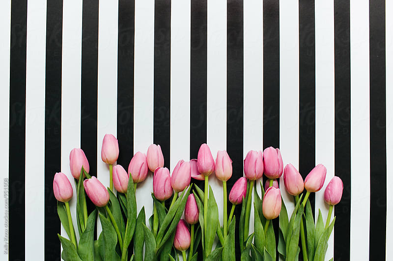 pink tulips on a striped background with copy space  by Kelly Knox for Stocksy United