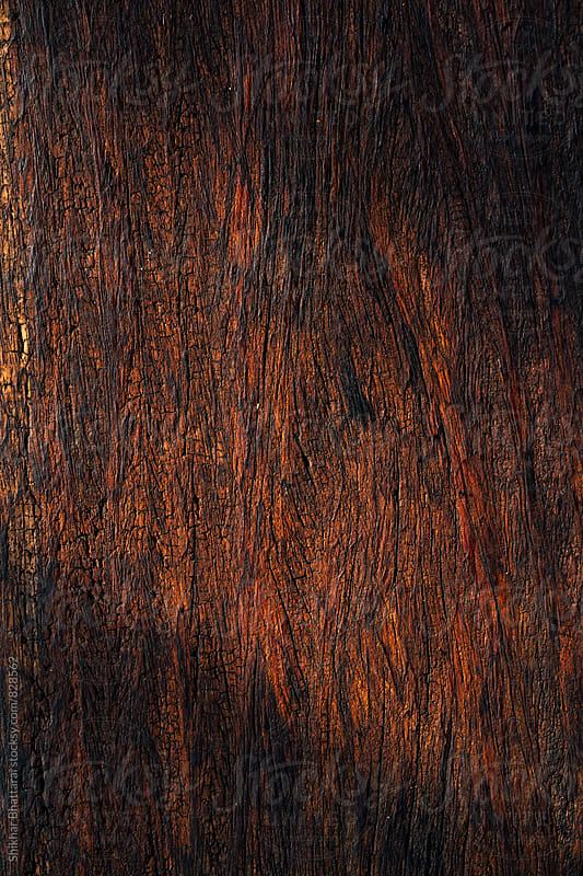 Wooden texture. by Shikhar Bhattarai for Stocksy United
