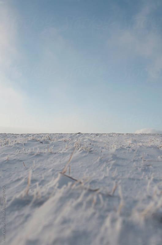 Frozen Grassy Plain by Neil Warburton for Stocksy United