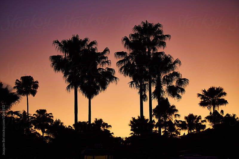Sunrise and palm trees by Joaquim Bel for Stocksy United