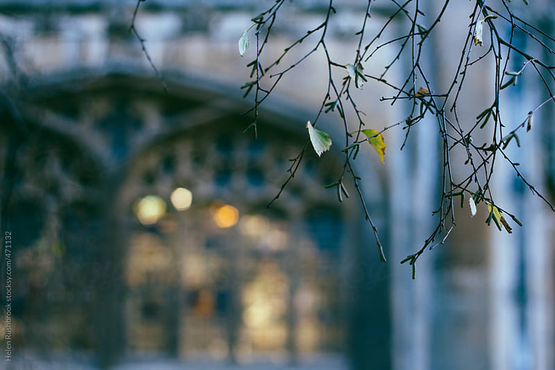 The almost-bare branches of a birch tree in front of a stained glass window by Helen Rushbrook for Stocksy United