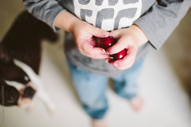 A little boy with two juicy red cherries and cherry juice on his hands. by Sarah Lalone for Stocksy United