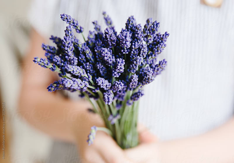 Hands holding a bunch of lavender flowers by Helen Rushbrook for Stocksy United