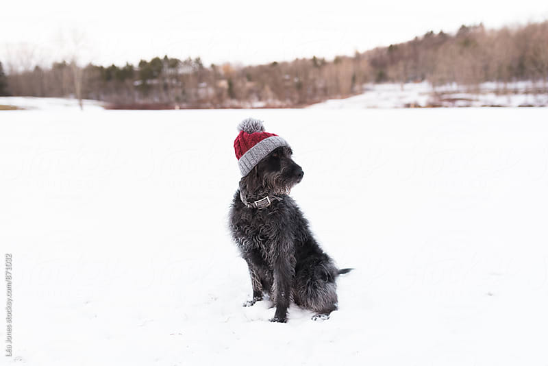 black dog with red wooly hat by Léa Jones for Stocksy United