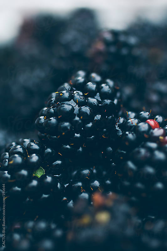 Blackberries by CACTUS Blai Baules for Stocksy United