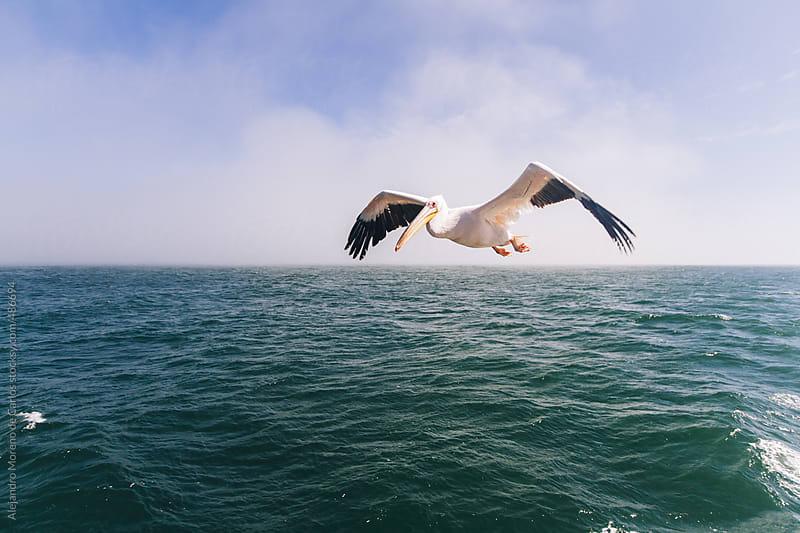 Pelican flying above the sea by Alejandro Moreno de Carlos for Stocksy United