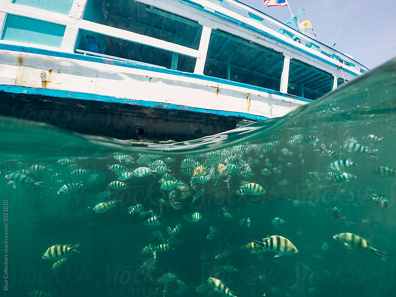 underwater view of many fish near the boat by Jordi Rulló for Stocksy United
