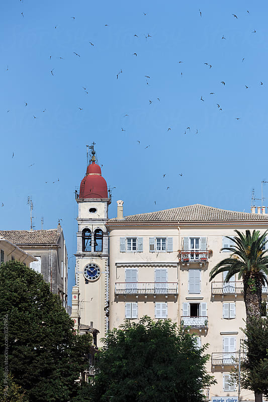 Venetian town of Corfu with red toped church. Swallows flying in blue sky. by Paul Phillips for Stocksy United