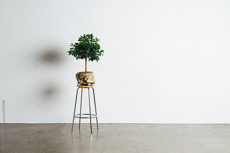 Plant against blank wall by GIC for Stocksy United
