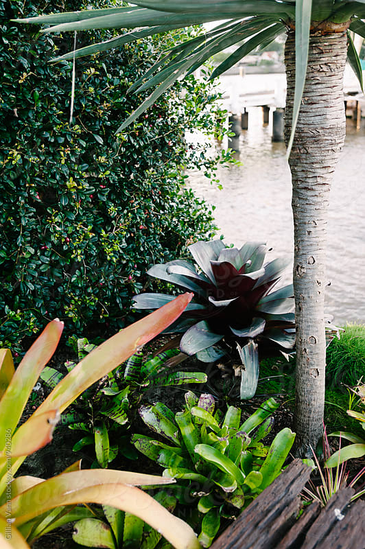 sub tropical garden next to a river by Gillian Vann for Stocksy United