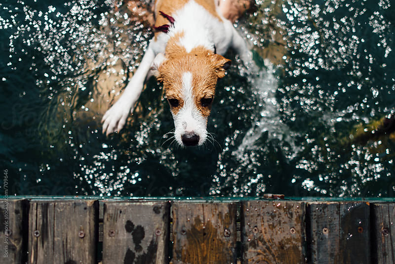 Jack russell puppy trying to get out of the water by Boris Jovanovic for Stocksy United