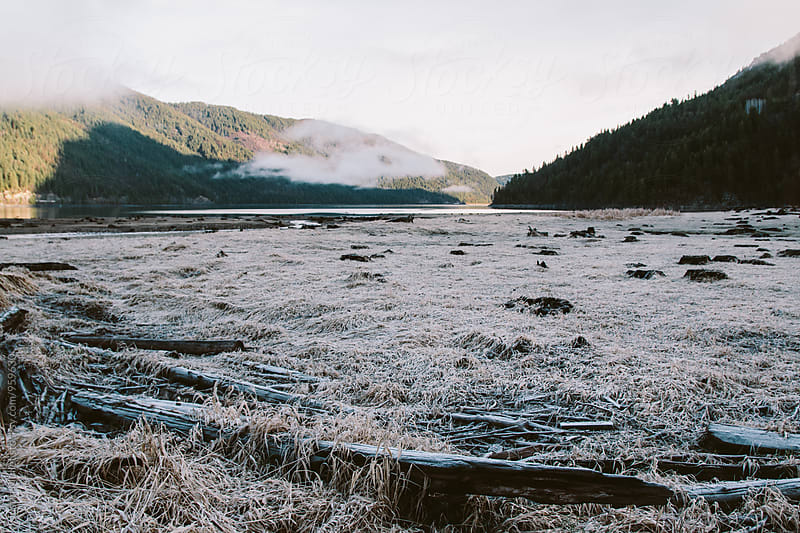 Frosty grass near the shore of a lake.  by Justin Mullet for Stocksy United