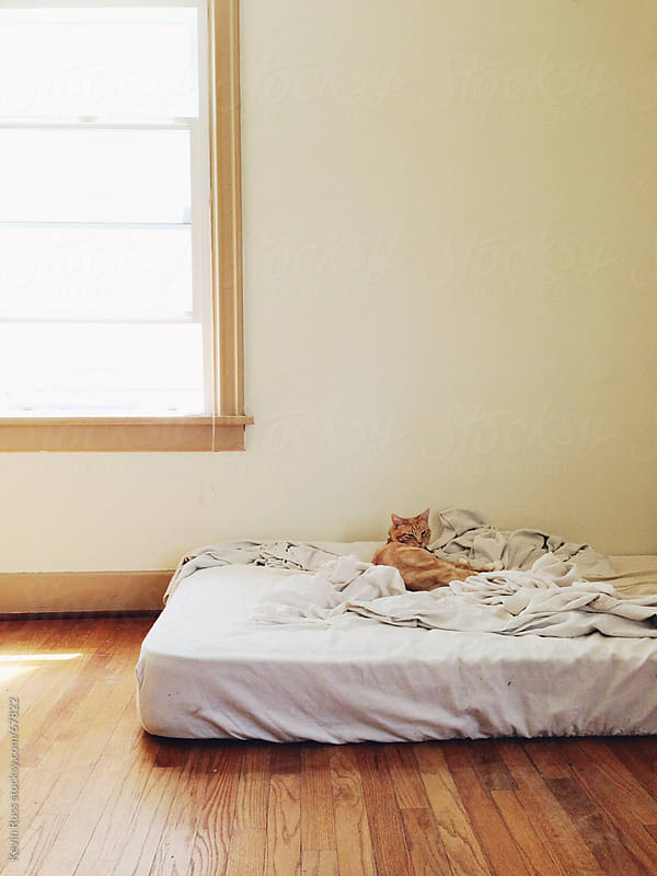 Sleepy Cat on Bed by Kevin Russ for Stocksy United